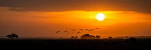 Golden African Sunset With Flock Of Birds