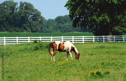 Grazing Horse in Northwestern Arkansas