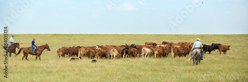 Photo Moving Cattle