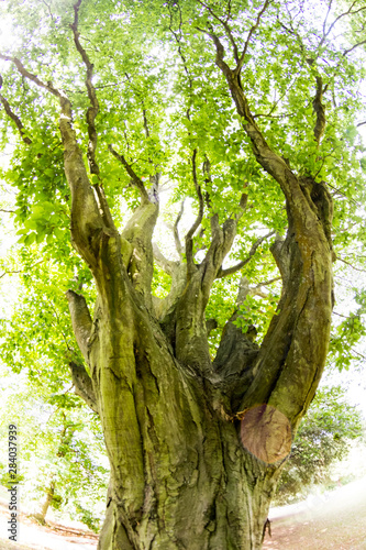Fotografía Beautiful green tree in park