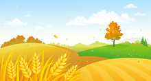 Vector Cartoon Illustration Of Fall Wheat Fields And Blue Sky