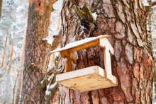 Beautiful Feeder For Bird In Winter Forest