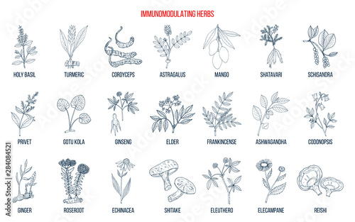Best medicinal herbs for the immune system Wallpaper Mural