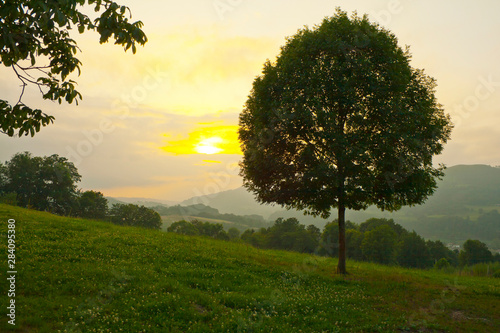 Deurstickers Surrealisme Meadow with tree in an area of hills at sunset with the sun in front.
