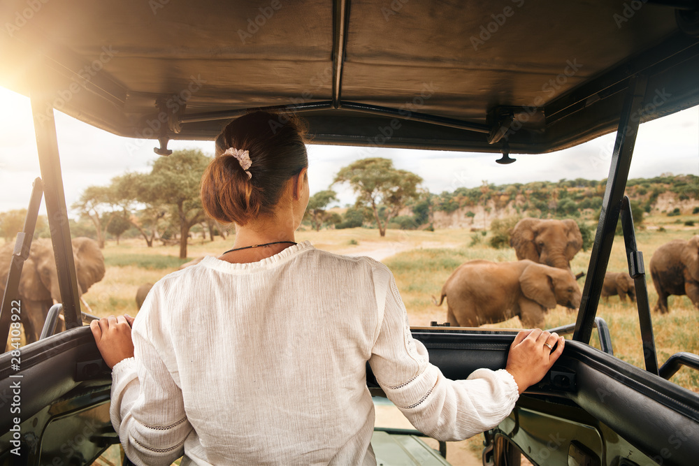 Fototapeta Woman tourist on safari in Africa, traveling by car with an open roof in Kenya and Tanzania, watching elephants in the savannah