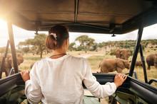 Woman Tourist On Safari In Afr...