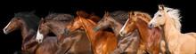 Horse Herd Run Isolated On Bla...