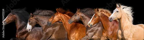 Fototapeta Horse herd run isolated on black background obraz