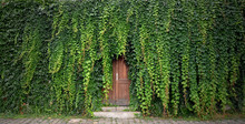 Door With Ivy Stock Images. Be...