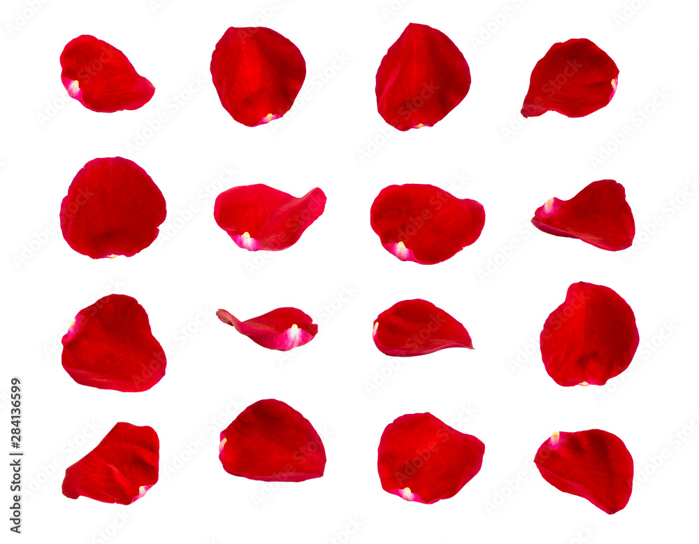 Fototapety, obrazy: red rose petals isolated