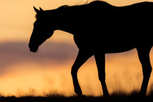 Horse At Sunset With Beautiful...