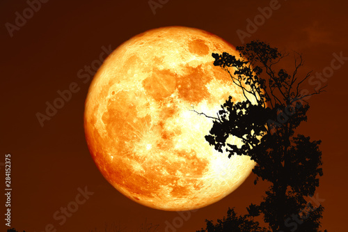 Photo sturgeon blood moon on the night sky back silhouette trees
