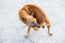 A Stray Dog Bite Tail And Stand On The Asphalt Street.