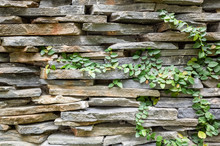Wall With Green Moss Background