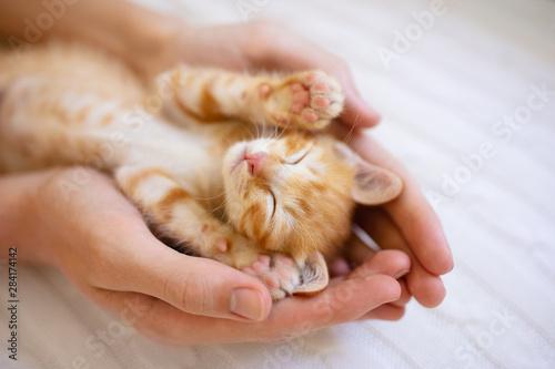 Fototapeta Kitten sleeping in man hands. Cats sleep.