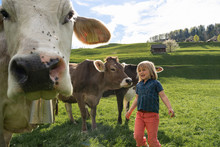 Girl With Cows On Pasture