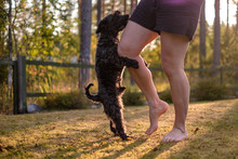 Dog Humping Or Mounting On Owner Leg.