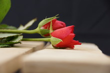 Two Red Roses On A Wooden Surf...