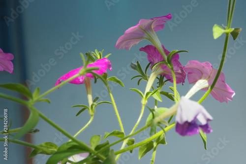 Aluminium Prints Flower shop pink flowers on a light blue background