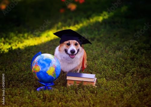 funny student dog puppy Corgi sitting in a garden on green grass with books and Wallpaper Mural