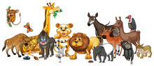 Different Wild Animals On White Background