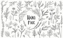 Set Plants Hand Made Vector