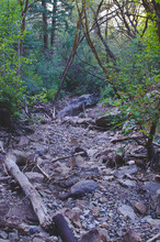 A Rocky And Empty Creek Bed In...