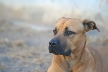 Mixed Breed Dog Against Blurre...