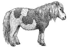 Pony Illustration, Drawing, En...