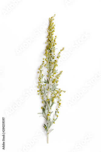 Photo Medicinal herbs, Sagebrush, Artemisia, mugwort on a white background