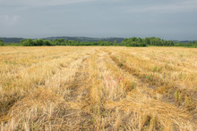 Golden Field After Haymaking