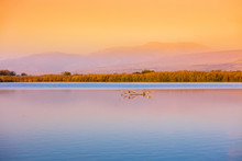 Beautiful Hula Lake Against Th...