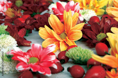 Colorful bouquet of Dahlias. Canvas Print