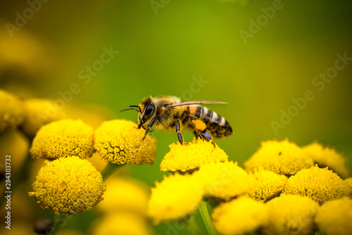 Photographie bee on a flower