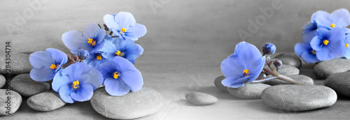 Fototapeta Zen stones and violet flowers on grey background. obraz