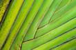 Leinwandbild Motiv Tropical leaf natural background. Macro shot