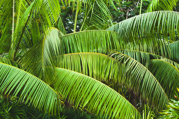 FototapetaPalm tree leaves, tropical background photo