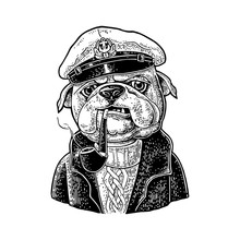 Sea Dog Smoking Pipe And Dressed In Captain Hat. Engraving