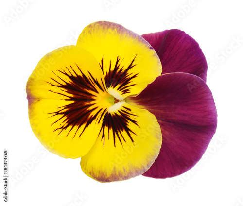 Foto auf Leinwand Stiefmutterchen Pansy flower isolated on white background. Flat lay, top view