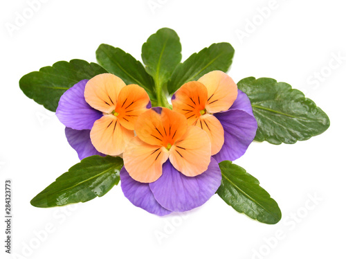 Papiers peints Pansies Pansy flowers orange with a leaf isolated on white background. Flat lay, top view. Beautiful bouquet