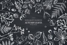 Design With Chalk Rowan, Rowan, Acorn, Buckeye, Fern, Maple, Birch, Maple Leaves, Lagurus