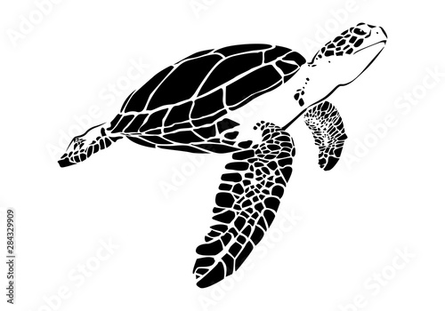 Obraz na plátně  graphic sea turtle,vector illustration of sea turtle