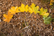 Autumn Leaves On The Ground In...