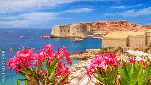 Foto auf AluDibond Südeuropa Coastal summer landscape - view of the blooming oleander and the Old Town of Dubrovnik with city beach on the Adriatic coast of Croatia