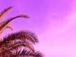 Leinwanddruck Bild - Summer palm trees against violet sky at tropical coast, coconut tree, copy space. Background for text, card, invitation, wedding