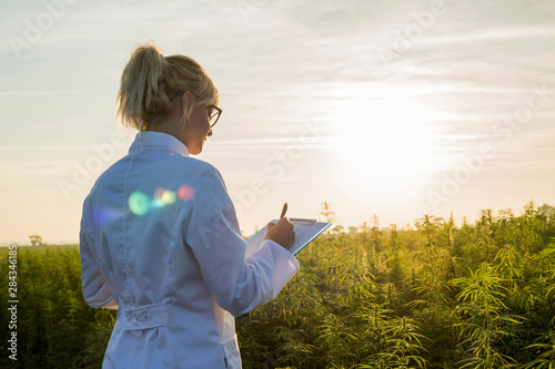 Fototapeta Scientist observing CBD hemp plants on marijuana field and taking notes obraz