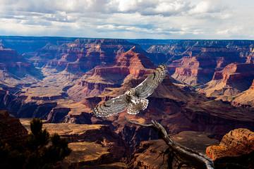 Fototapeta Ptaki Great Horned Owl Landing Over the Grand Canyon