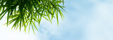 Bamboo leaves, Sky, Green leaf on blurred greenery background. Beautiful leaf texture in nature. Natural background. close-up of macro with free space for text.