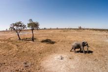 Africa, Botswana, Chobe National Park, Aerial View Of Elephant (Loxodonta Africana) Walking Savuti Marsh's Grasslands In Okavango Delta