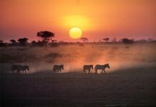 Africa, Kenya, Amboseli NP. Ze...